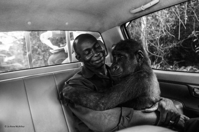 جوایز عکاسی طنز حیات وحش؛ منتخبان سال ۲۰۱۹