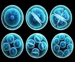 پایانی نوبت دوم زیست شناسی - آزمون شماره 1 (متوسط)